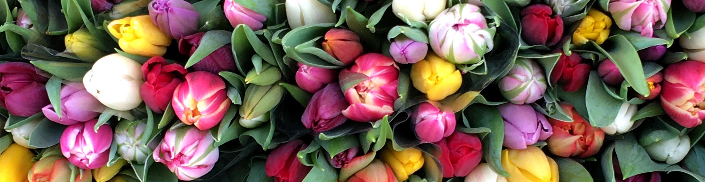 Tulpen auf dem Markt von Deventer